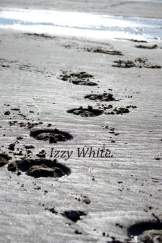 Hoofprints in the sand