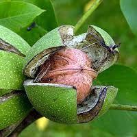 Beneficio de las nueces