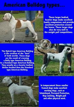 American Bulldog types