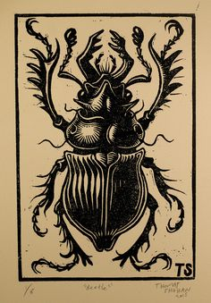 Beetle linocut, by Thomas Shahan
