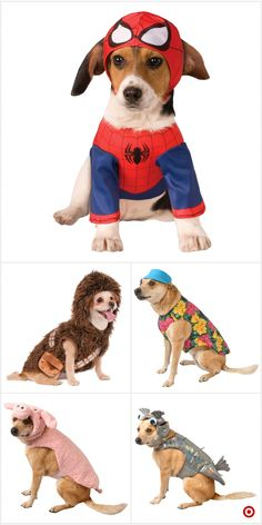 Shop target for pet costume sets you will love at great low Cute Dog Costumes, Pet Halloween Costumes, Animal Costumes, Dog Halloween, Cute Little Animals, Cute Funny Animals, Cute Cats, Baby Animals Pictures, Cute Animal Pictures