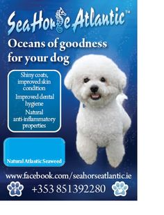 Seahorse Atlantic #dog #supplement Sea Weed Recipes, Marine Environment, Natural Supplements, Seaweed, Dental, Your Dog, Dog Cat, Horses, Cats