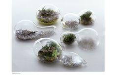 Terrarium - Natureza escultórica em vidro por Paula Hayes