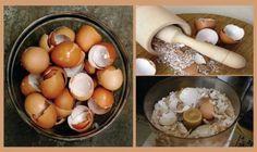 6 întrebuințări ale cojilor de ouă în gospodărie — Doza de Sănătate