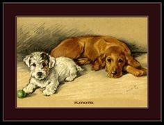 English-Picture-Poster-Print-Golden-Retriever-Sealyham-Terrier-Dog-Dogs-Art