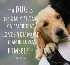Here is Dog Quotes for you. Dog Quotes top 100 greatest dog quotes and sayings with images. Dog Quotes dog quotes we rounded up the best of Love My Dog, Puppy Love, Lucky Puppy, Golden Retriever Mix, Golden Retrievers, Golden Retriever Quotes, Retriever Puppy, Labrador Retrievers, Cute Puppies