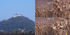 Bezděz a slunečnice před podzimní sklizní, přírodní krmelce pro ptactvo...