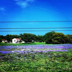 Wild Flowers in Texas Hill Country.