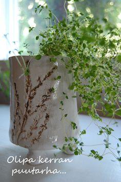 Timjami keramiikka ruukussa Parsley, Herbs, Food, Essen, Herb, Meals, Yemek, Eten, Medicinal Plants
