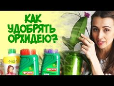КАК УДОБРЯТЬ ОРХИДЕЮ? МОИ СОВЕТЫ. - YouTube Voss Bottle, Water Bottle, Abs, Drinks, Youtube, Drinking, Crunches, Beverages, Water Flask
