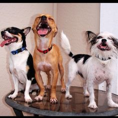Don't stop laughing, even cute animals are doing it!!! Dogs laugh