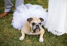 Bull dog in tutu at summer blush Nashville wedding with rustic details, photographed by Graham Yelton | The Pink Bride www.thepinkbride.com