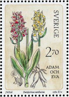 "Sweden 2kr70ö ""Wild Orchids"" 1982, Dactylorhiza sambucina (Adam och Eva), Zlatko Jakus sc."