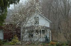 tovah martin's pretty cottage home complete with japanese magnolia out front.