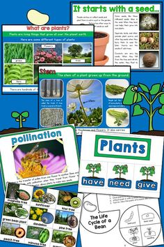 From Seed to Plant: An Informational Life Cycle Unit for Primary Grades-- Informative Slideshow, Anchor Charts, Writing Materials, Activities, and Printables! kindergarten, first grade, $