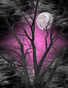 Black and White Blue Sky Moon Tree Wall Art Picture Moon Moon, Moon Art, Blue Moon, Moon Images, Moon Pictures, Pretty Pictures, Art Pictures, Moon Shadow, Sombra Lunar