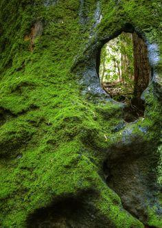 Woodland Portal (tree,stone,mossy,verdant,woods,nature)