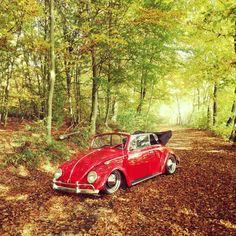 Letzte Ausfahrt 🤔 #herbst #laub #Blätter #Käfer #Cabrio #low #airride #bug #garbus #aircooled #love #vosvossevdasi #sonne