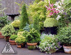 Simple Patio Garden using dwarf conifers and other plants Evergreen Container, Evergreen Garden, Container Plants, Container Gardening, Gardening Tips, Greenhouse Gardening, Garden Spaces, Garden Pots, Garden Ideas