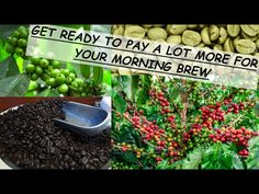 Coffee Prices, Go Up, Survival Food, Get Ready, Previous Year, Java, How To Dry Basil, Farmer, How To Become