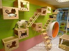 Awesome Playroom for Cats. Animal Room, Cat Climbing Tree, Climbing Wall, Gatos Cat, Cat Perch, Cat Shelves, Cat Playground, Cat Enclosure, Cat Room