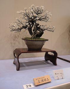 Kokufu-017-0514 by JSpyro, via Flickr