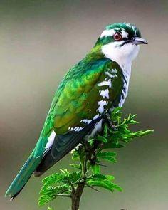 Birds of the World: Eagles, Falcons, Owls, Songbirds & More - Bird Photography! Beautiful Creatures, Animals Beautiful, Cute Animals, Unusual Animals, Green Animals, Most Beautiful Birds, Majestic Animals, Animals Dog, Cute Birds
