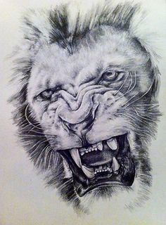 Angry Lion | Beautiful Creatures | Pinterest | Lion