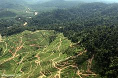 Oil palm plantations and forest in Sabah.