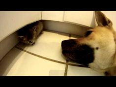 ▶ Rescue Dog Helps Take Care of Foster Kitten - YouTube