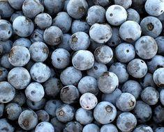 blueberries blueberries blueberries