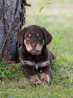 Puppies Premium Dog Coverage! http://www.offers.couponrainbow.com/embrace-pet-insurance/