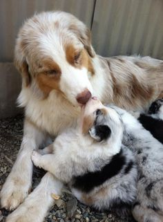 From their earliest days… | 23 Dog Best Friends Who Love Each Other A Lot