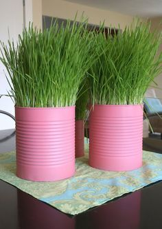 While away on our Babymoon , my friend Katie grew 30 containers of wheat grass we planned to use as center. Grass Centerpiece, Centerpieces, Easter Centerpiece, Centerpiece Ideas, Growing Wheat Grass, Relief Society Activities, Indoor Garden, Indoor Plants, Flower Decorations