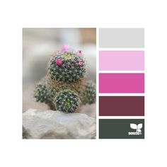 Design Seeds ❤ liked on Polyvore featuring colors, color palettes, backgrounds, design seeds and palettes