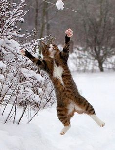 I love playing catch in the snow.