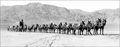 Twenty Mule Team power