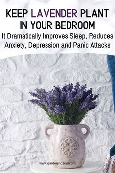 Keep Lavender Plant in Your Bedroom: It Dramatically Improves Sleep, Reduces Anxiety, Depression and Panic Attacks – Best Home Plants Ivy Plants, Indoor Plants, Indoor Lavender Plant, Inside Plants, Indoor Gardening, English Ivy Plant, Natural Homes, Homemade Cleaning Products, Health