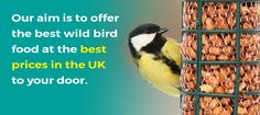 Get free Outlook email and calendar, plus Office Online apps like Word, Excel and PowerPoint. Sign in to access your Outlook, Hotmail or Live email account. Wild Bird Food, Wild Birds, About Uk, Good Things