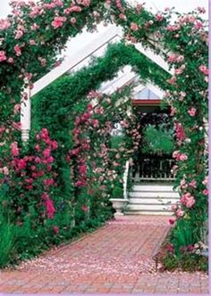 Typical Twist Arbor, roses, patio, outdoor living,...
