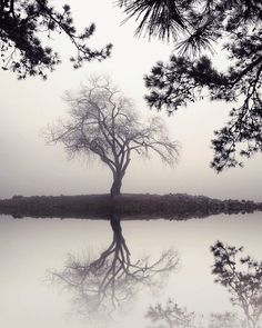 landscape photography black and white nature by NicholasBellPhoto, $50.00