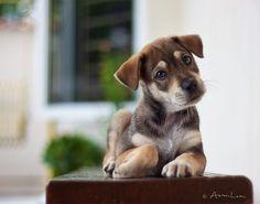 omg, puppy!