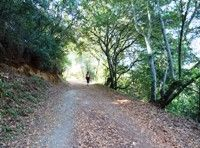 Almaden Quicksilver County Park is recognized as a National Historic District because of the ruins from over 130 years of mining (1845-1976).    Parking is free. The trailhead is located at the end of the first parking lot.  The trails are multi-use and shared among leashed dogs, horses, hikers and bikers.
