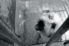 Adopt, don't shop. Animal Shelter, Animal Rescue, Rescue Dogs, Your Pet, Pup, Have Fun, Adoption, Princess, Pictures