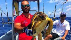 Pescatore sportivo soccorre tartaruga marina a Ventotene - News - NAUTICA REPORT