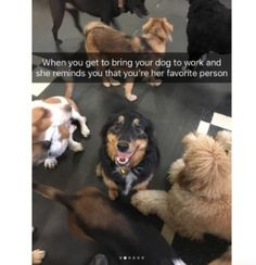 Funny Memes Funniest Dog Snaps That Will Just Make Your Day ! (21+ Pictures)