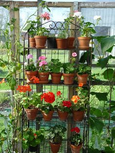 Another great gardening idea for small homes. If only there were someone to do all these things for us...