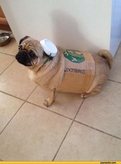 pug jokes :: dogs / funny pictures & best jokes: comics, images, video, humor, gif animation - i lol'd