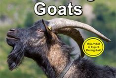 The Udderly EZ Goat Milking Machine Makes Life Easier - Backyard Goats Goat Hoof Trimming, Buy A Goat, Breeding Goats, Goat Playground, Goat Care, Nigerian Dwarf Goats, Raising Goats, Goat Farming, Baby Goats