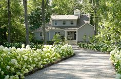 Lush hydrangeas bordering a driveway ~ Phillip Mitchell designer Southern Landscaping, Driveway Landscaping, Florida Landscaping, Dream Garden, Home And Garden, Landscape Design, Garden Design, White Gardens, Garden Planning